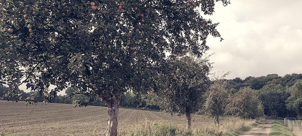 Warum die Blütenstadt 'Blütenstadt' heißt: Bergischer Streifzug Nr. 4, Obstweg.